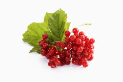 Red snowball berries, viburnum opulus royalty free stock photos