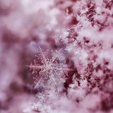 Red Snowflake. Digital composite of snowflakes and frost Stock Image