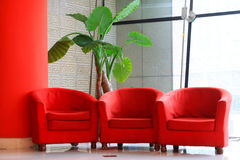 Red sofa and green flowers in the hall Stock Image