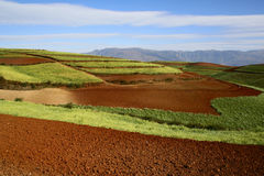 The Red Soil of Dongchuan. The Wumeng Mountains' bright red soil, the buckwheat's yellow and Yunnan's dramatic skies make the region around Dongchuan a paradise Royalty Free Stock Photos