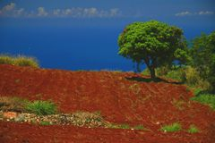 Red soil, jamaica Royalty Free Stock Photography