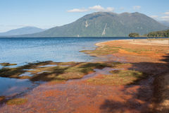 Red soil on lake Brunner shoreline Royalty Free Stock Photo