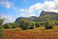 Red soil on Majorca. Red soil field with olive trees under a bright summer sky and mountains on Majorca island, Spain Stock Photography