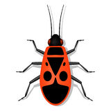 Red soldier bug with black spots. On the back Royalty Free Stock Images