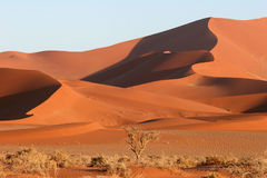 Red Sossusvlei dunes. Red dunes against blue clear sky. Sossusvlei. Namib desert. Namibia Stock Photo