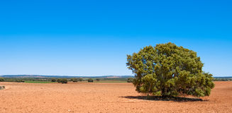 Red Spanish land Royalty Free Stock Photography