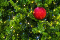 Red sparkles ball on a Christmas tree. Stock Image