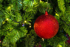 Red sparkles ball on a Christmas tree. Royalty Free Stock Images