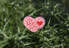 Red Speckled Heart on Thorns Royalty Free Stock Photos