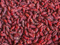 Red spicy barberries background Stock Photography