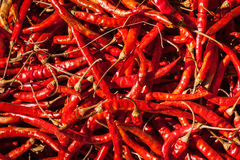 Red spicy chili peppers Stock Image