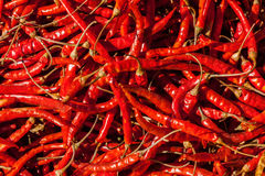 Red spicy chili peppers Royalty Free Stock Image