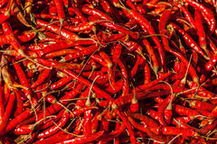 Red spicy chili peppers Royalty Free Stock Images