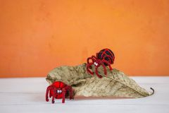 Red spider on dry leaf with space on orange background Stock Photos