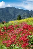 Red flowers and mountain stock photos