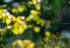 Red spider in the web on beautiful forest bokeh. Lovely background with red spider in the web on beautiful forest foliage bokeh Stock Images