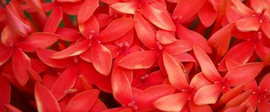 Red spike flower in close up. Red flower spike stock photo