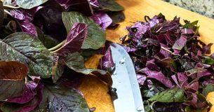 Red spinach, amaranth on cutting board being cut for salad with steel knife, stock photos