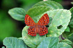 Red spotted butterfly. On a leaf Royalty Free Stock Image