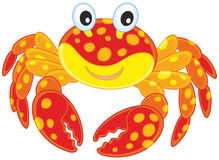 Red spotted crab Royalty Free Stock Image