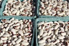Red Spotted Kidney Beans Stock Photo