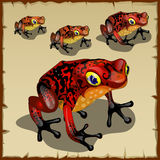 Red spotted toad with big eyes Stock Image