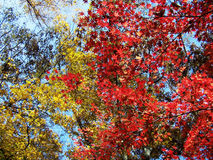 Red spring colorful forests Royalty Free Stock Photo