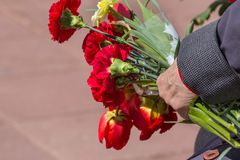 Red carnations in the veteran`s hand on may 9. Red spring flowers in the hand of an elderly woman-a veteran of the great Patriotic war. Victory day-flowers for royalty free stock photography