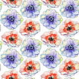 Red spring  flowers, watercolor illustration Royalty Free Stock Images