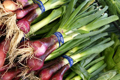 Red spring onion, Allium cepa Royalty Free Stock Photo
