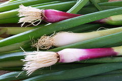 Red spring onions. Background made of fresh red spring onions Stock Photography