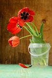Red spring tulips flowers Royalty Free Stock Photography