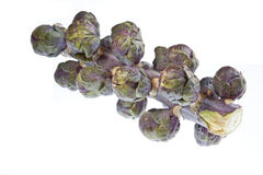 Red Sprouts Royalty Free Stock Image