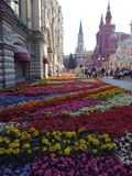 Red Square. In flower Stock Photos