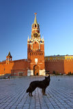 Red square Moscow. Dog on the red square Moscow Royalty Free Stock Photo