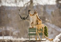 Red squirrel with a bench skeleton and bat Royalty Free Stock Photo