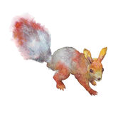 Red squirrel with bushy tail. Watercolor illustration Stock Photos