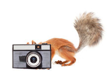 Red squirrel with camera Stock Images