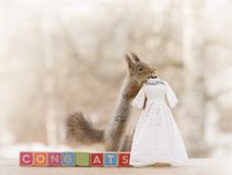Red squirrel on congrats blocks with a wedding dress Stock Images
