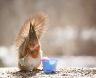 Red squirrel is holding an broom with a bucket. Red squirrel is holding a broom with a bucket Stock Photo