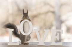 Red squirrel holding an capital from the word love Stock Image