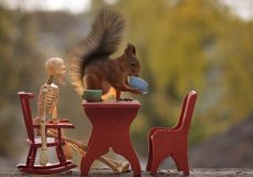 Squirrel holding a cup at a table with a skeleton Royalty Free Stock Photography