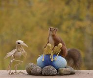 Red squirrel holding skeletons on egg Stock Photography