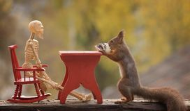 Squirrel holding a skull at a table with skeleton Stock Photo