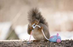 Red squirrel is holding a vacuum cleaner. Red squirrel is holding an vacuum cleaner Royalty Free Stock Photos