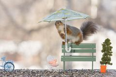 Free Red Squirrel Is Holding An Umbrella On A Bench Stock Image - 113786081