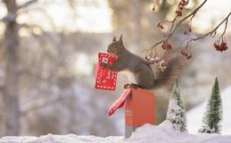 Squirrel on a letterbox holding a christmas letter. Red squirrel on a letterbox holding a christmas letter Royalty Free Stock Photo