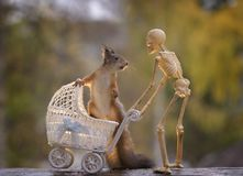 Squirrel sits in a stroller with a skeleton Royalty Free Stock Images