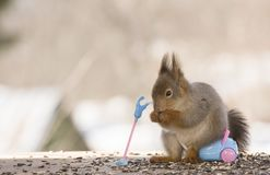 Red squirrel is sitting on a vacuum cleaner. Red squirrel is sitting on an vacuum cleaner Royalty Free Stock Photo