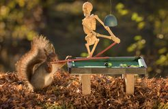 squirrel and skeleton at a pool table Stock Photography